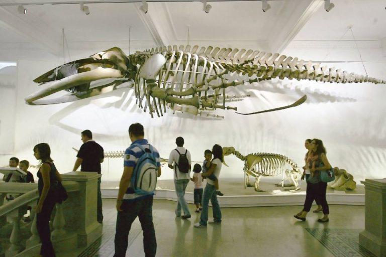 Excursii culturale gratuite pentru elevi, la Bucuresti. Au inceput inscrierile