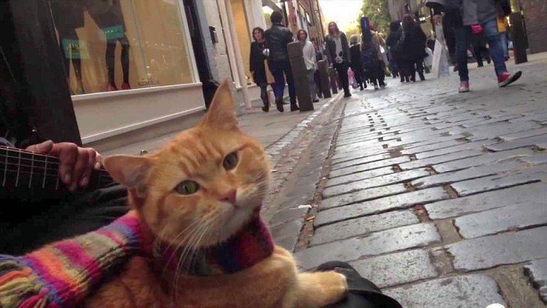 Cine vrea sa ia o pisicuta draguta acasa? Eveniment duminica cu adoptii de pisici!