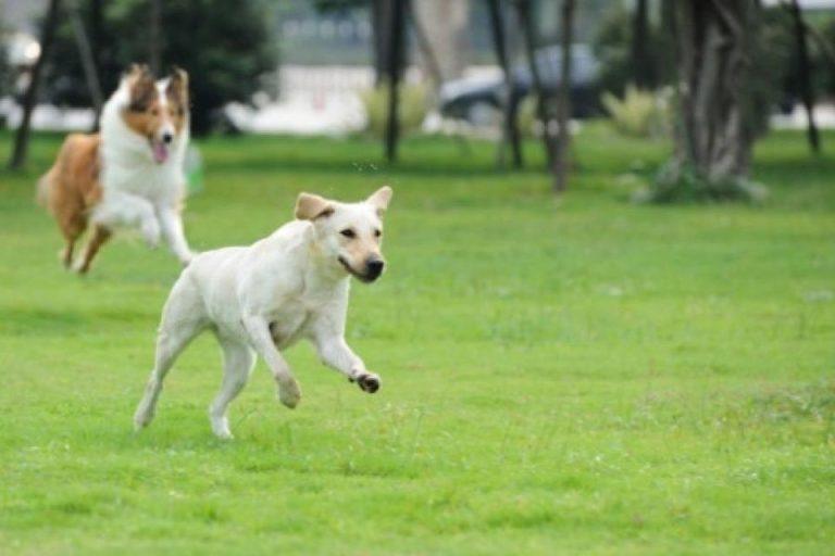 Proiect revolutionar: Bucurestiul se transforma intr-un RAI pentru animale!