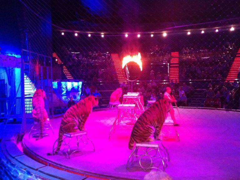 Folosirea animalelor in spectacolele de circ interzisa prin lege in Bucuresti! Vezi ce se va intampla la Circul Globus!