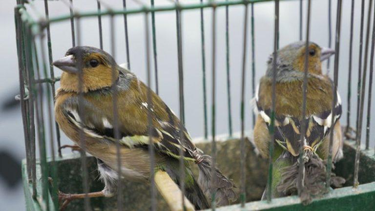 Cruzime asupra animalelor in pietele din Bucuresti si autoritatile nu fac nimic!