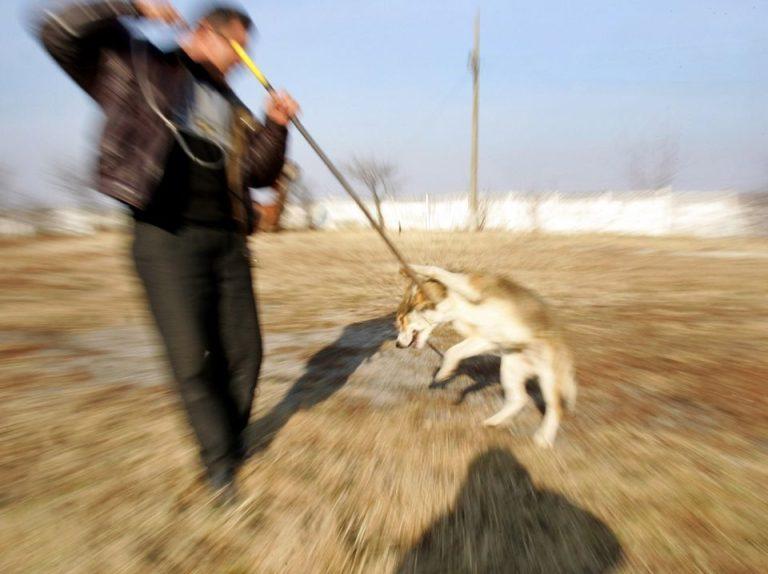 """Asociatiile pentru protectia animalelor din Bucuresti o critica dur pe Gabriela Firea! """"Vine numai cu gaselnite consumatoare de bani publici!"""""""