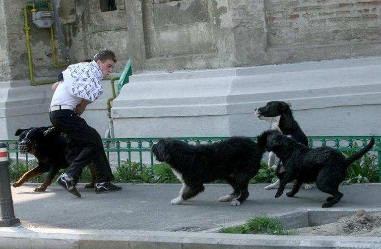 Primaria Capitalei vrea sa infiinteze un cimitir, o ambulanta si un hotel pentru animalele din Bucuresti!