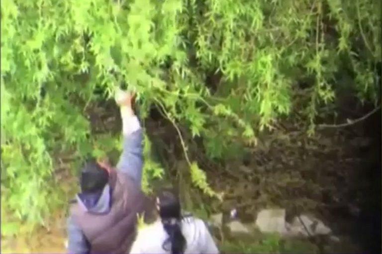 VIDEO – In Bucuresti se fura ca-n codru dintr-o zona protejata prin lege!