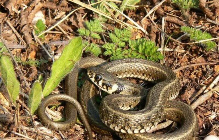 Bucurestenii semnaleaza aparitia a tot mai multor serpi in parcurile Capitalei