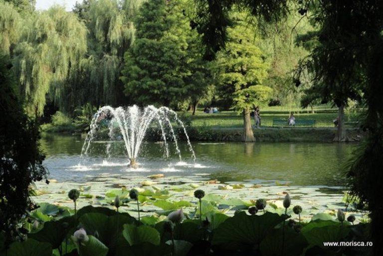 Un cunoscut lac din Bucuresti este aproape de disparitia completa
