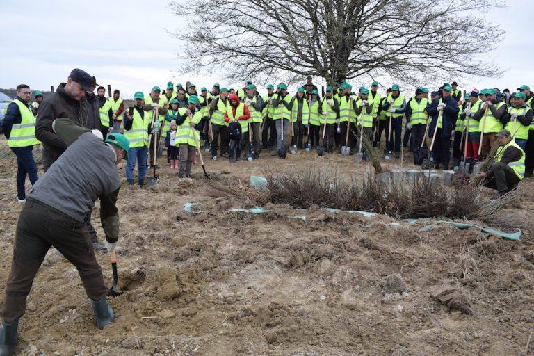 Activitate de week-end: 50.000 de copaci plantati cu ajutorul voluntarilor!