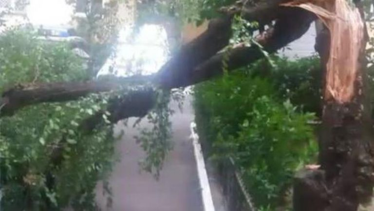Furtuna care a maturat Bucurestiul a lasat in urma zeci de masini avariate si aproape 40 de copaci rupti